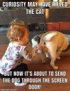 curiosity and the dog.jpg