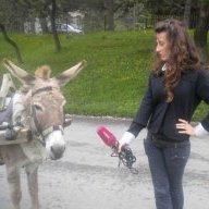 xX Swamp Donkey