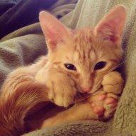 JustAHousecat