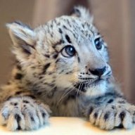 stoneleopard