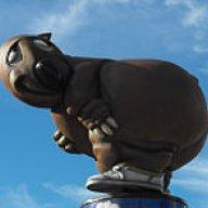wombat24